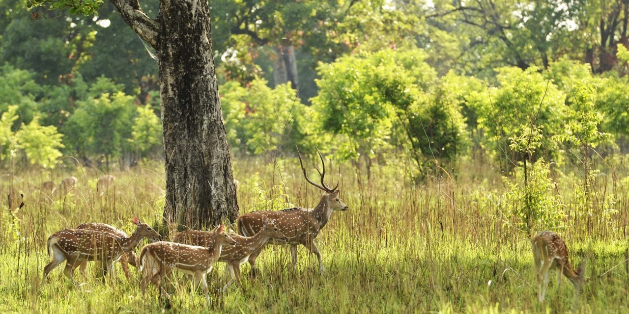 Simple Guidance For You In Bardia National Park