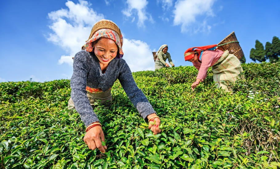a simple guide to know darjeeling better