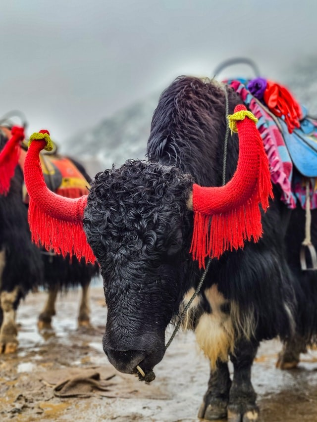 Famous Things to Buy in Gangtok